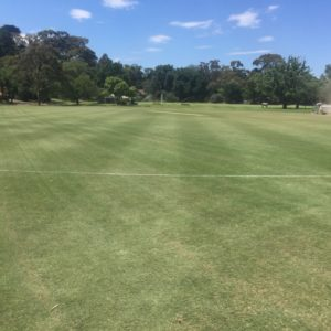 Scotch College cricket wicket reconstruction in Melbourne